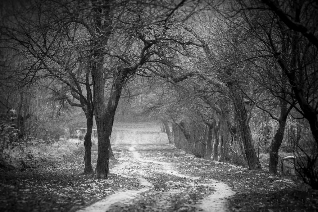 black white landscape 8