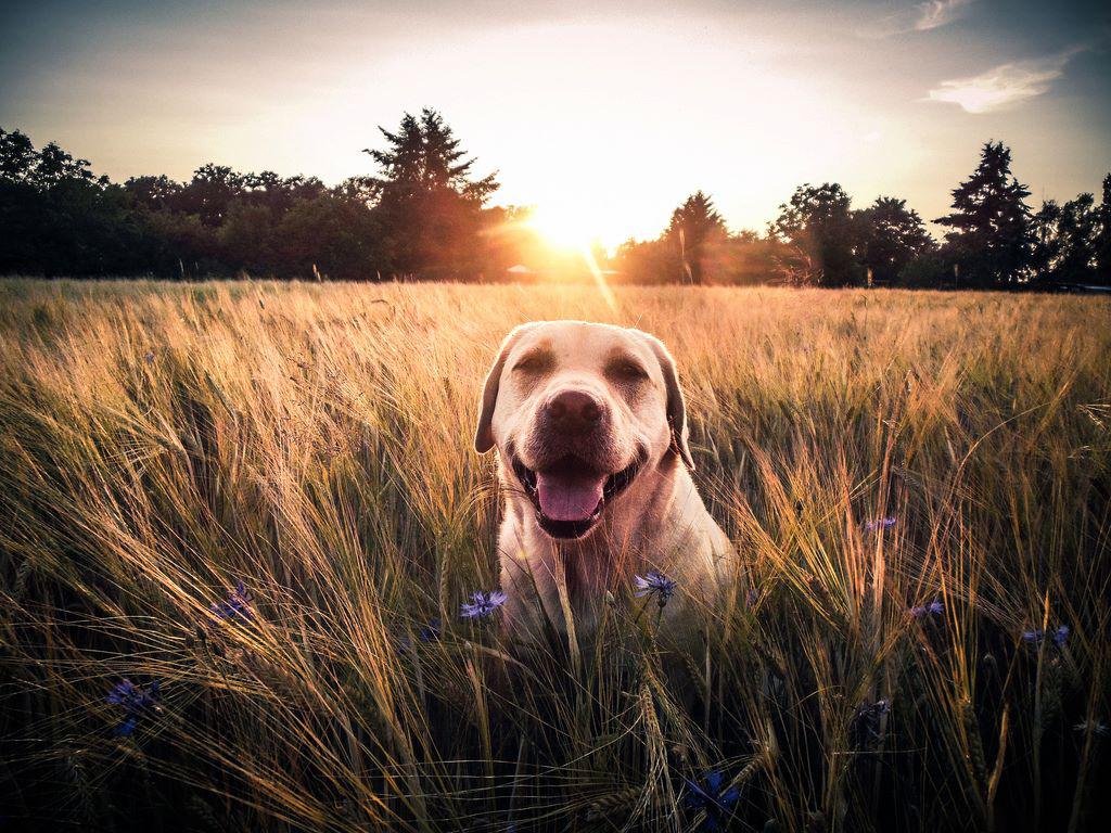 Wie Sie Ihren Hund fotografieren
