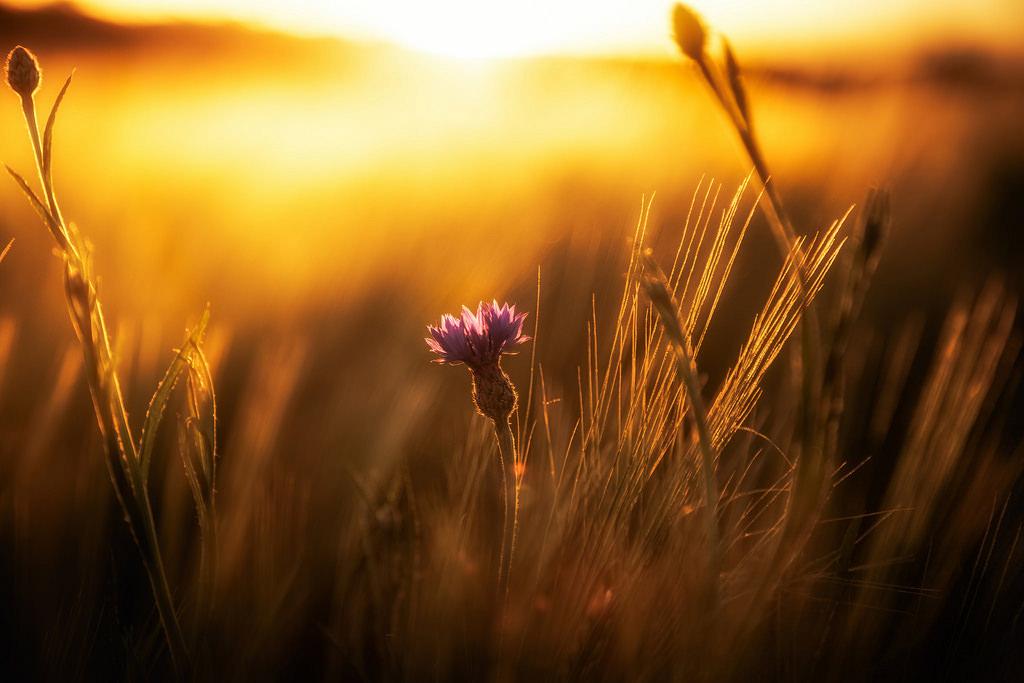 Landschaftsfotografie fotograf filmemacher frankfurt patrick schmetzer drohne landschaft natur 51