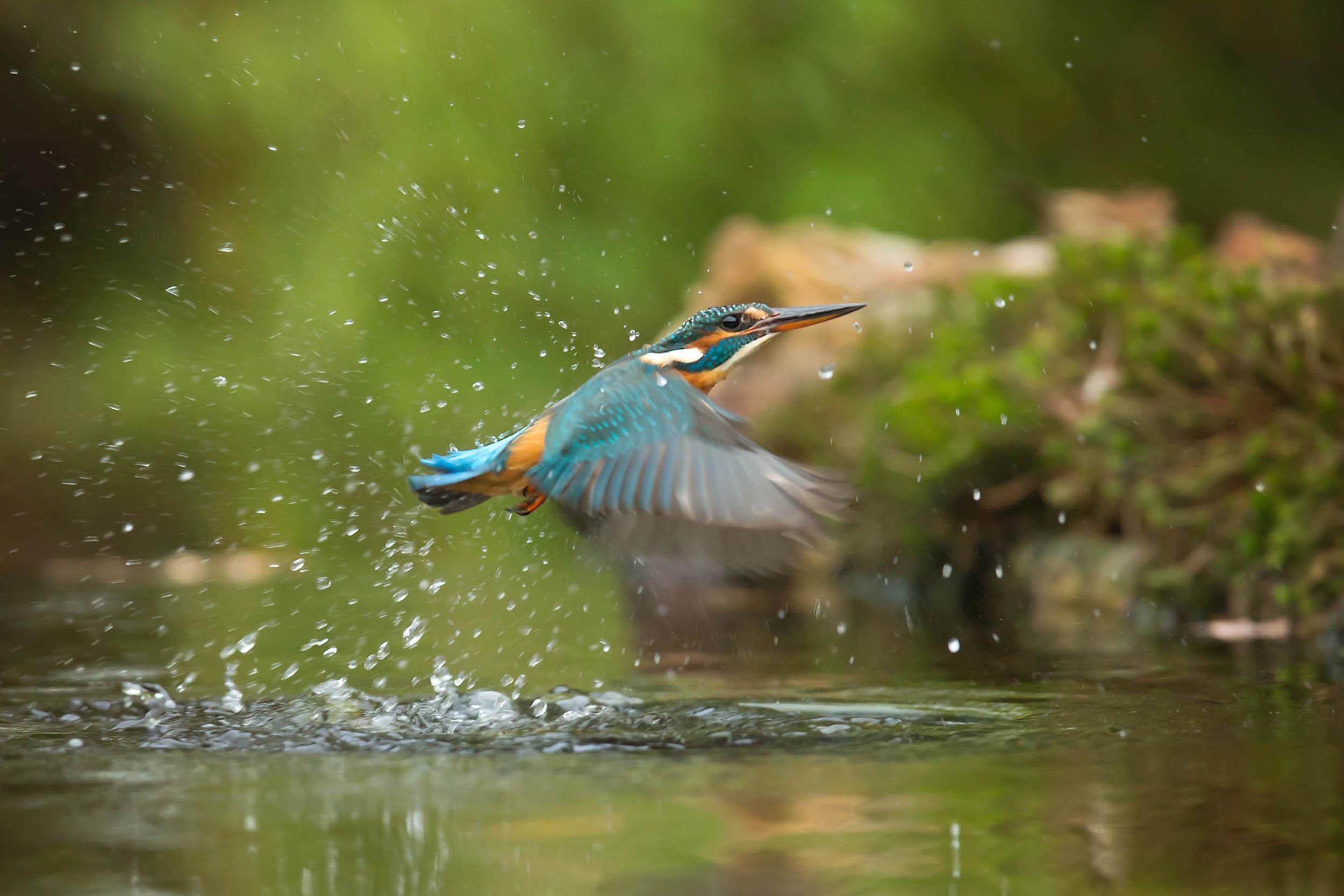 Vogel burstmode basics photography Photographing animals in the wild