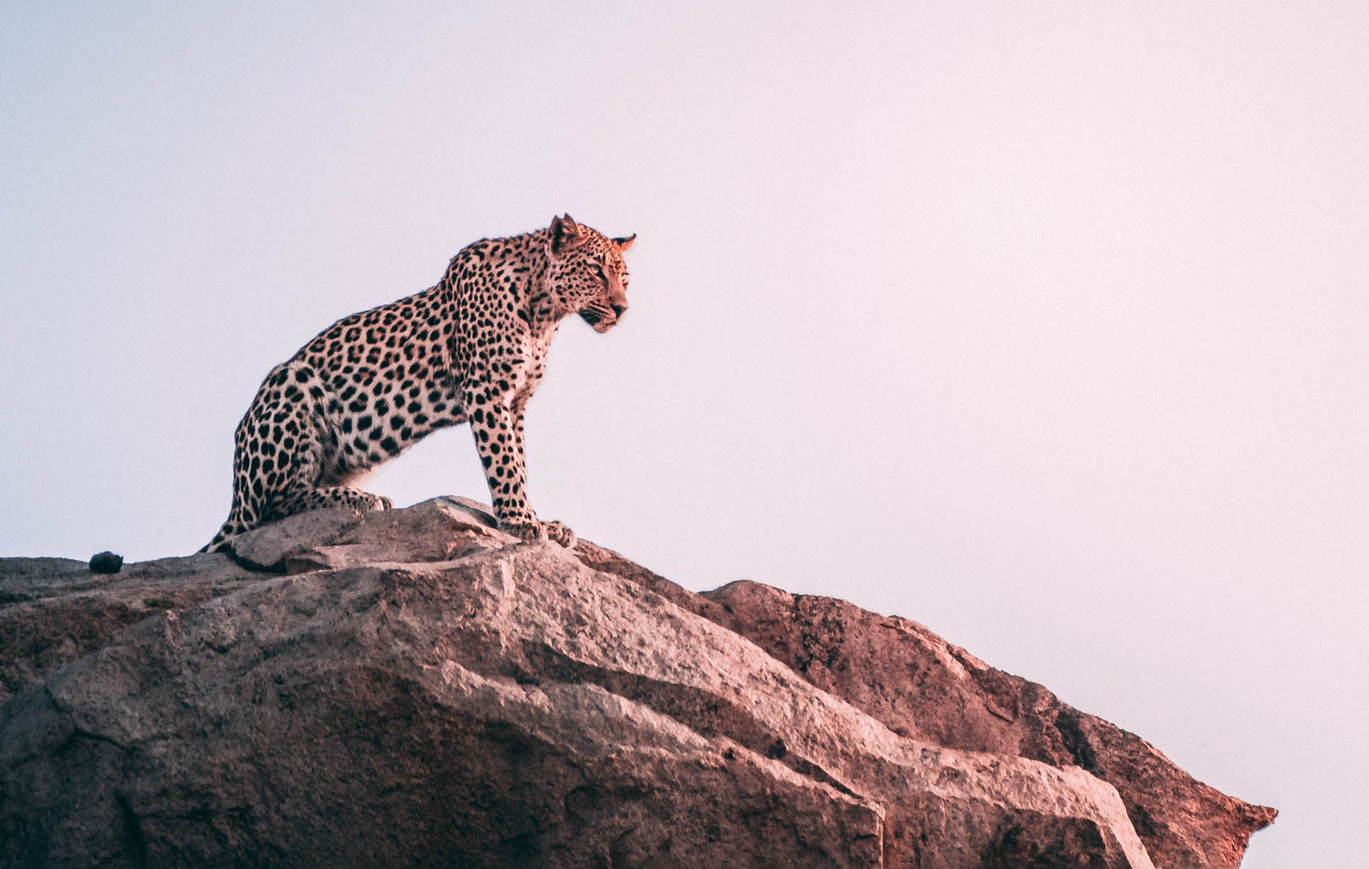 distance animal copy basics photography Photographing animals in the wild