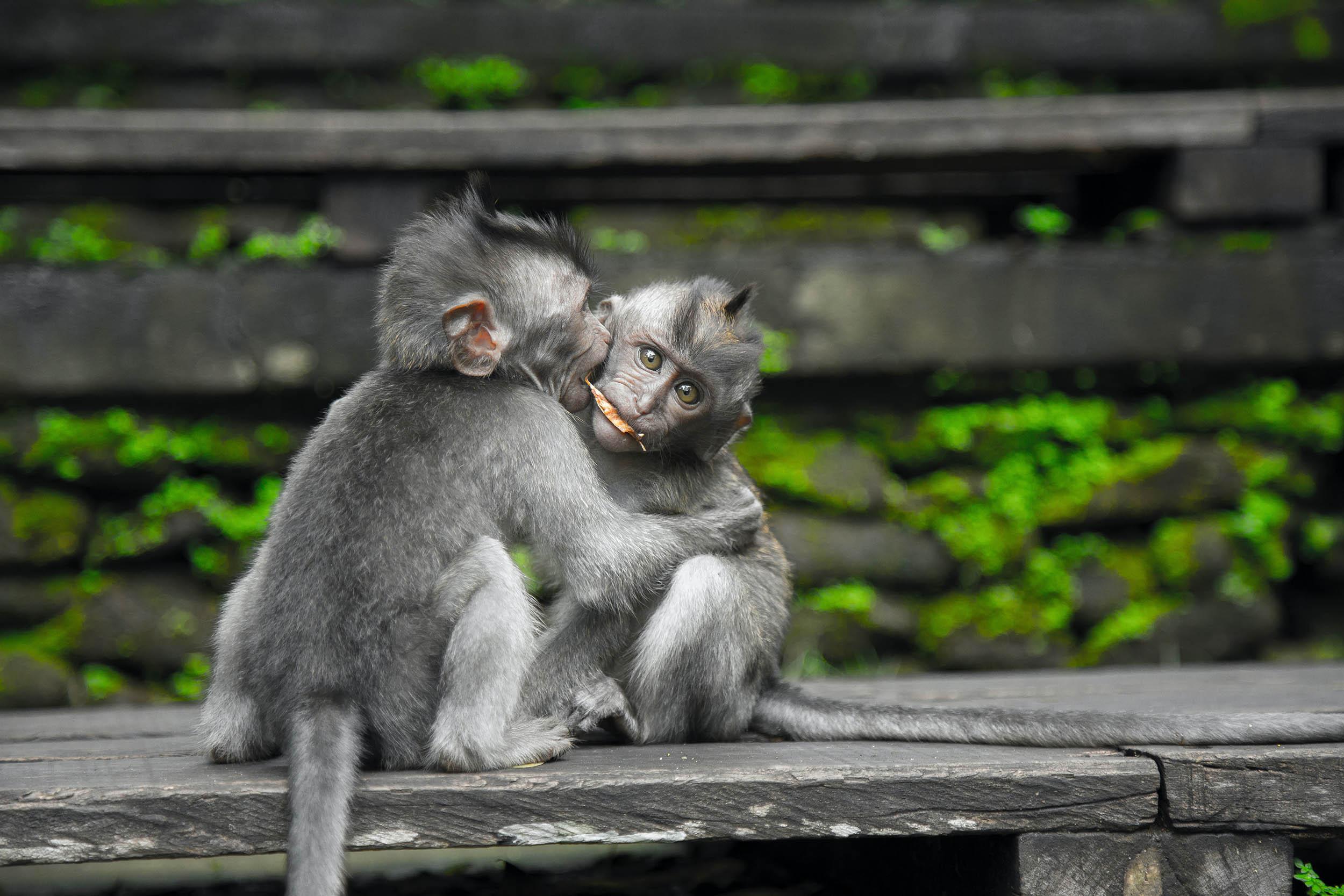 monkey burstmode basics photography Photographing animals in the wild