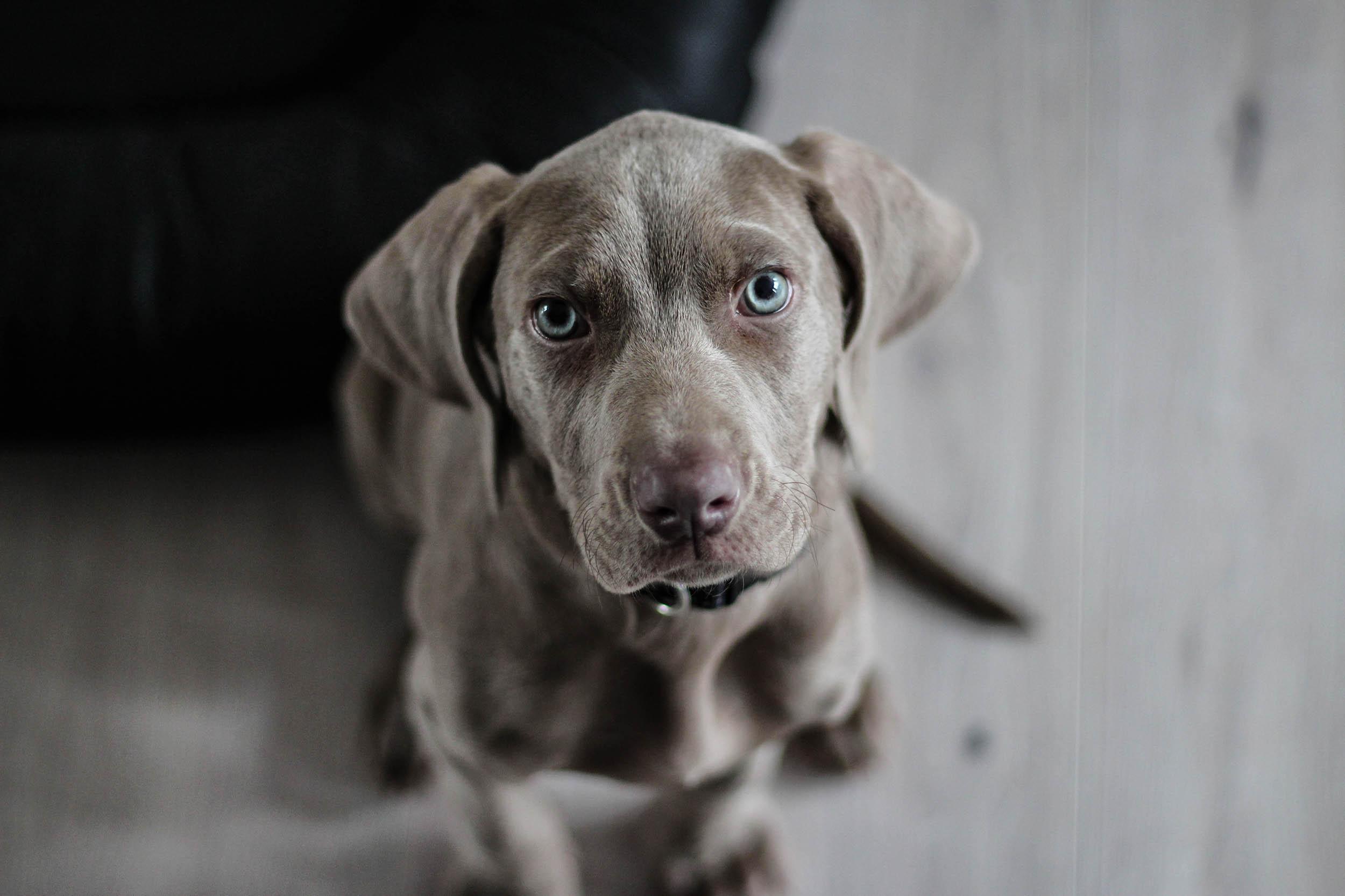 dog gray basics photography How to photograph your dog
