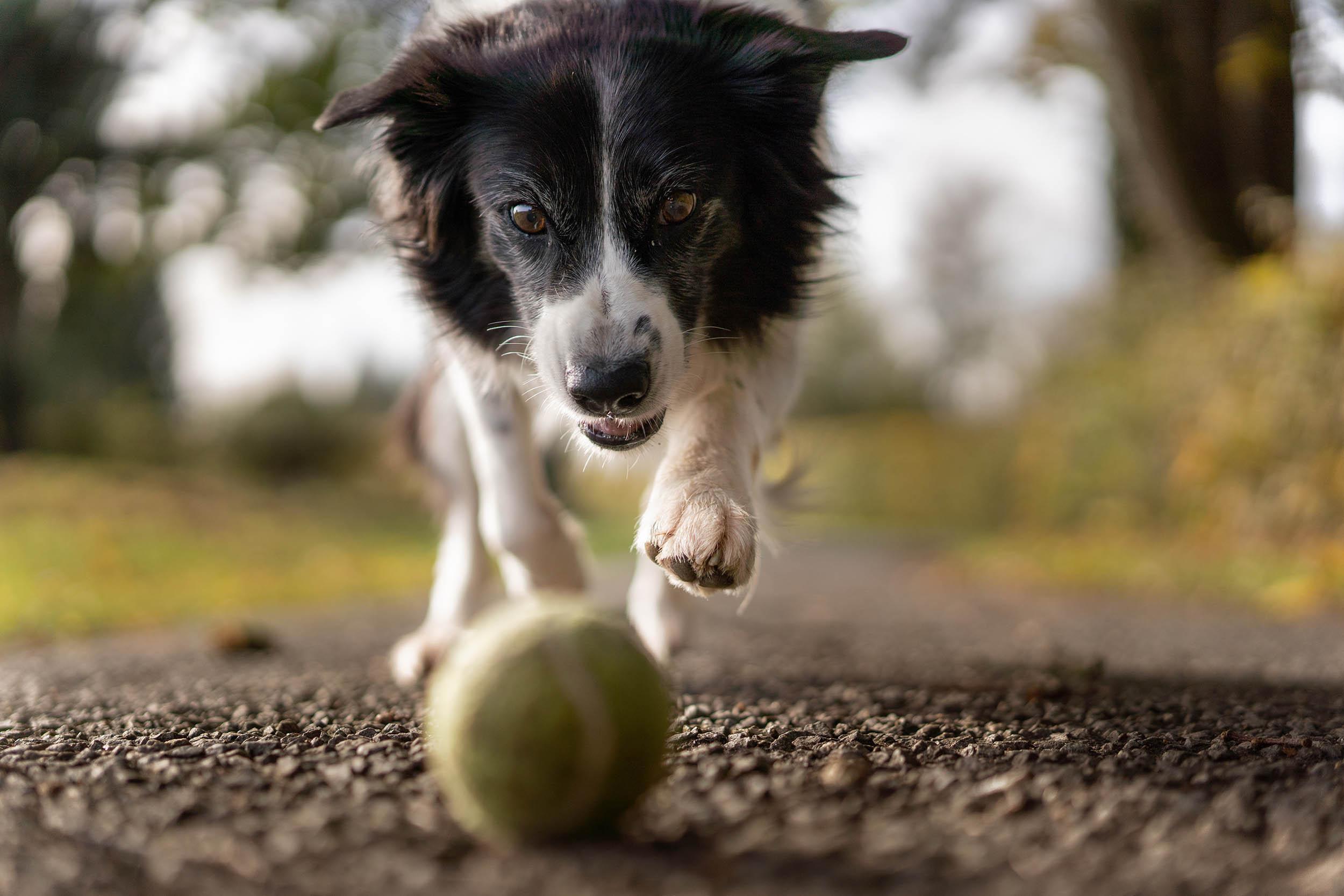 dog playing photography basics How to photograph your dog