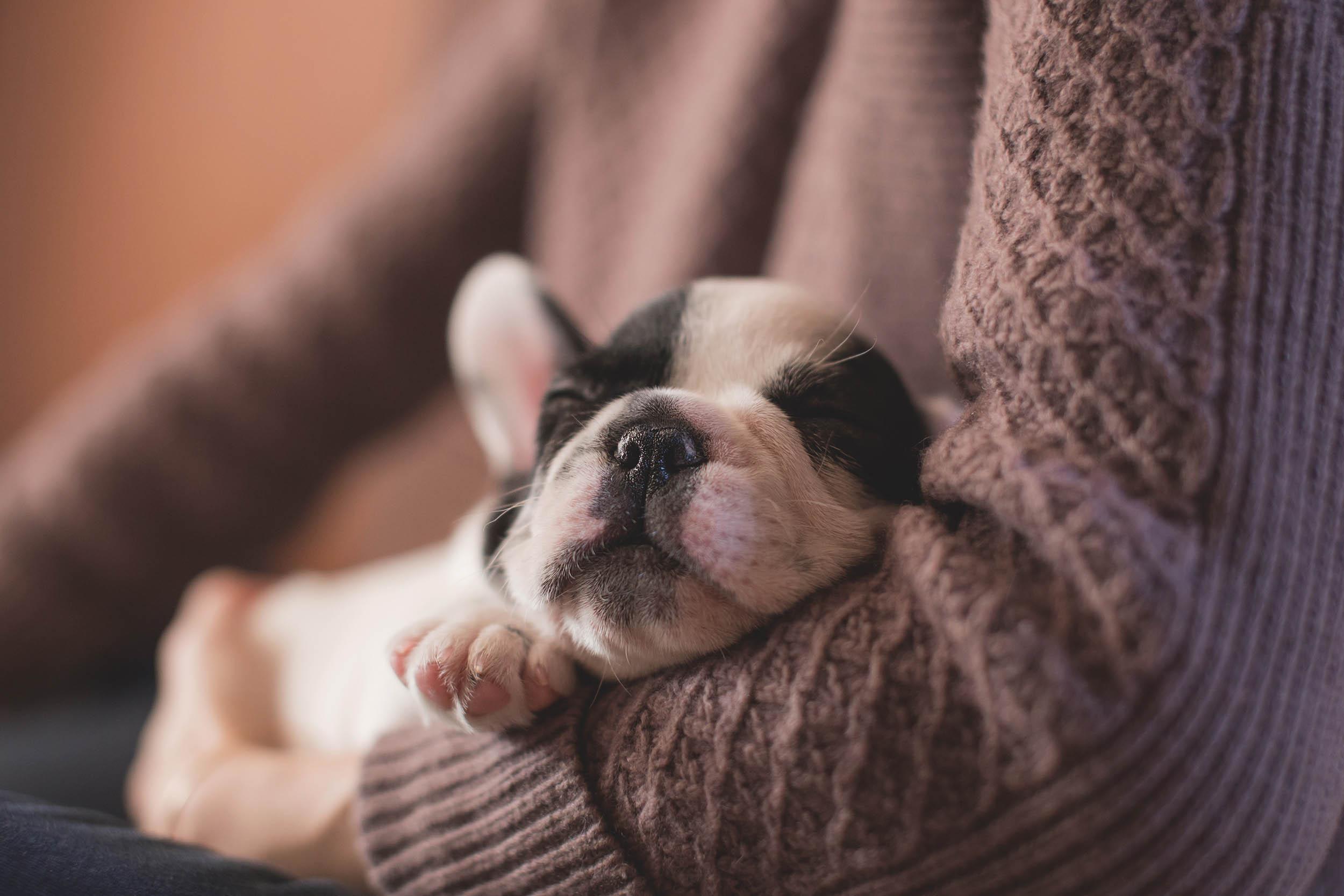 dog sleeping basics photography How to photograph your dog