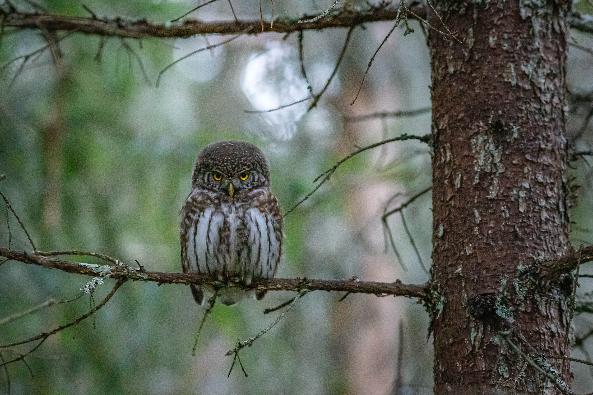background owl basics photography Photographing animals in the wild