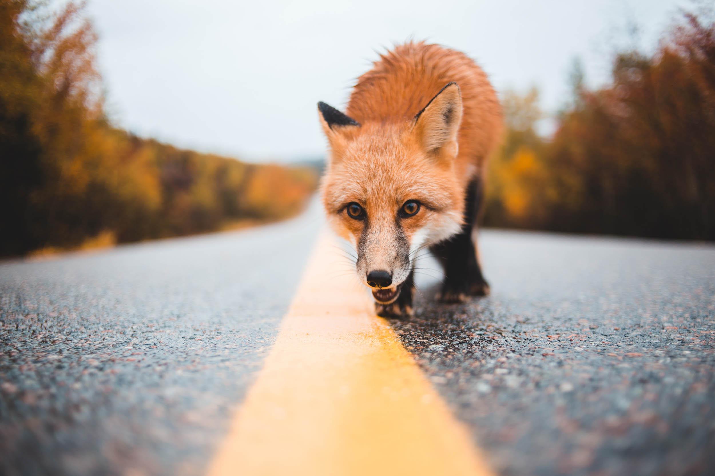 behavior animals basics photography Photographing animals in the wild