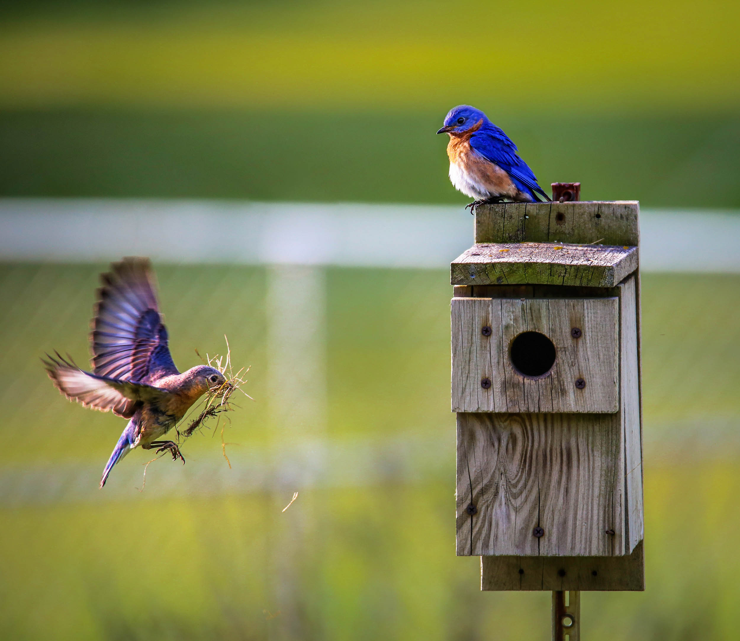Vogel shutter speed Basics photography Photographing animals in the wild