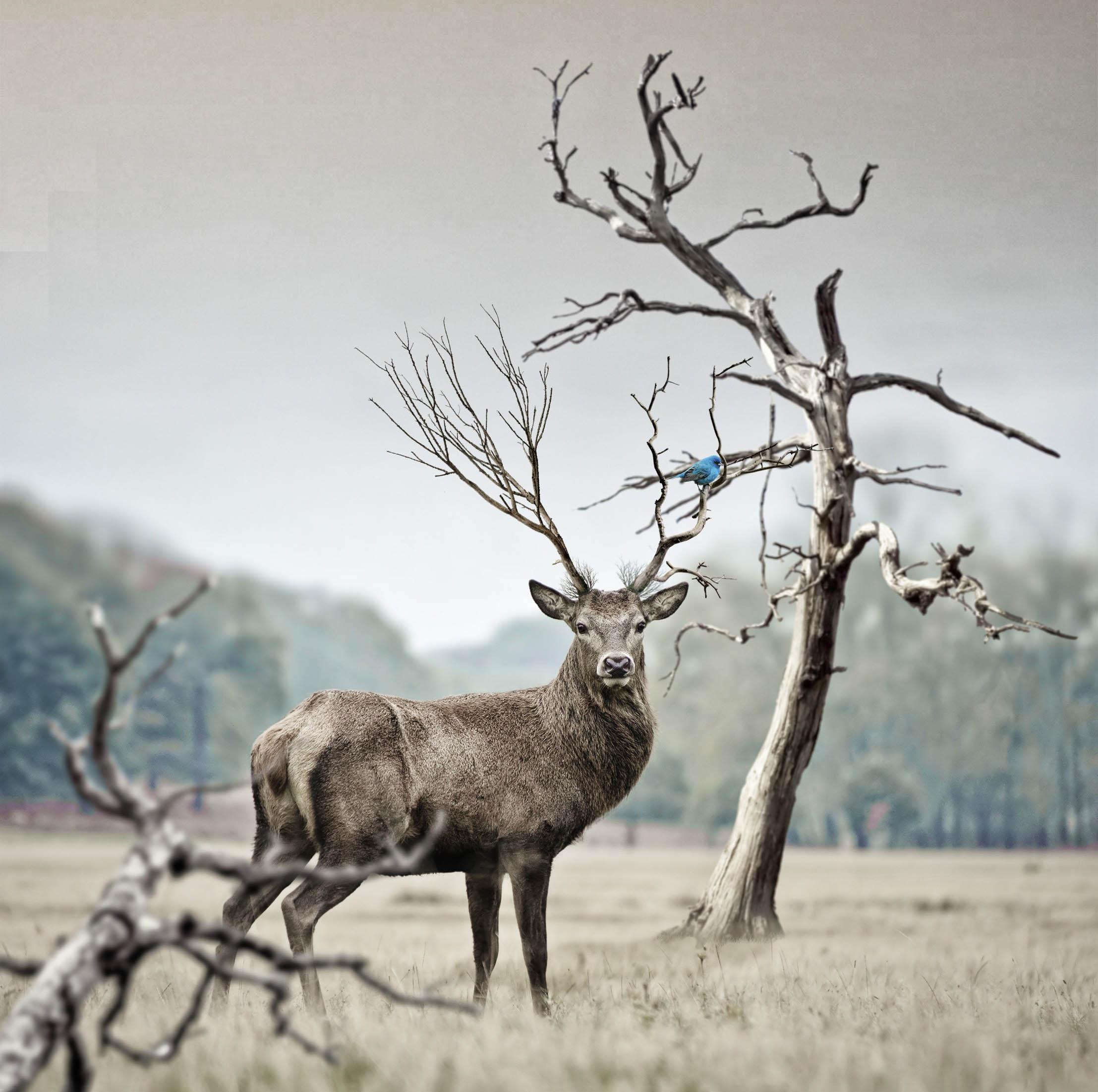 vordergrundhirsch basics photography Photographing animals in the wild